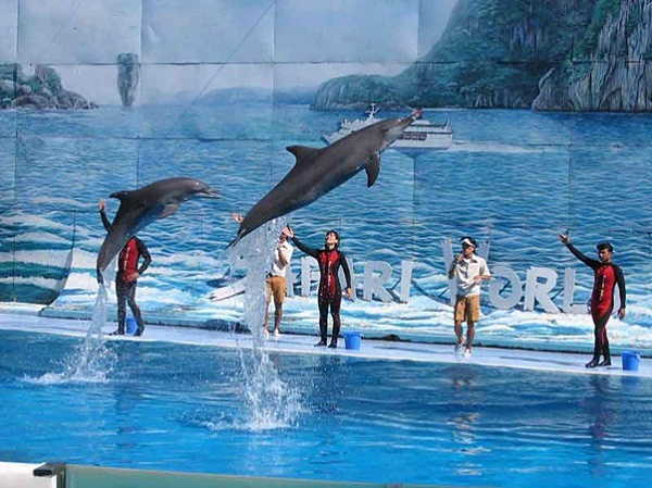 Dolphin performance in entertainment area of Tuan Chau islet