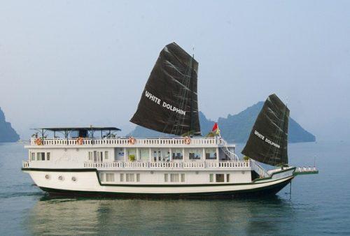 Luxury White Dolphin Cruise