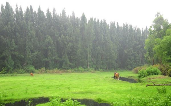 A peaceful scenery on Ngoc Vung Island