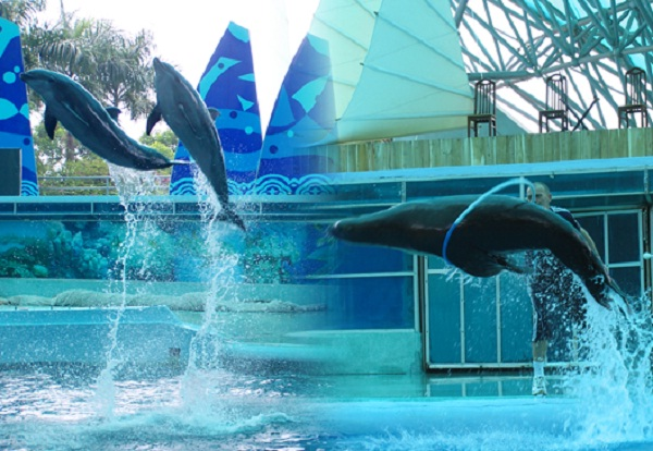 There are dolphin shows 6 days a week