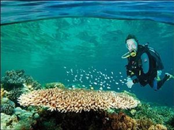 Dive in Phu Quoc Island
