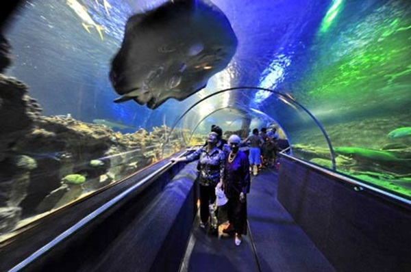 Tri Nguyen Aquarium - the largest aquarium Vietnam