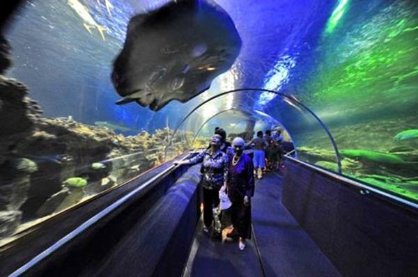 Tri Nguyen Aquarium - the largest aquarium Vietnam- Source: www ...