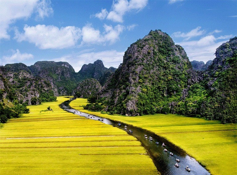 Tam Coc in rice harvest season