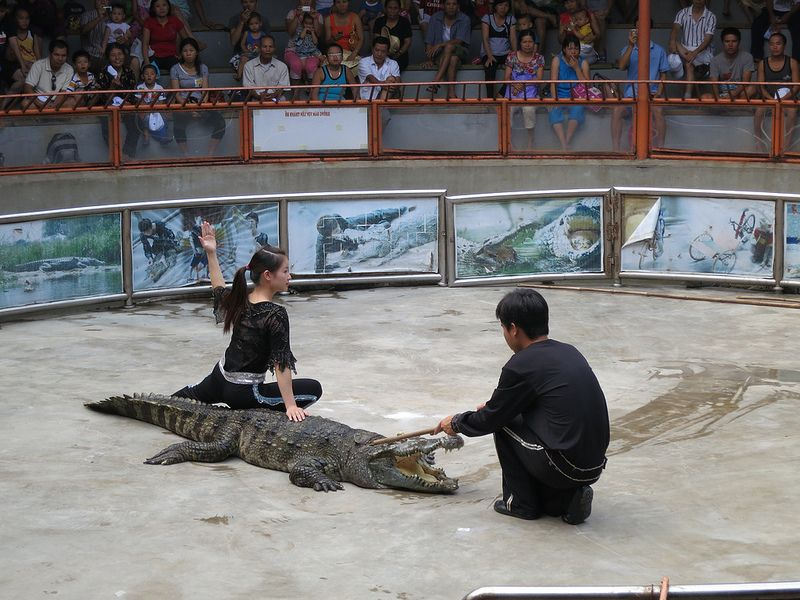 Crocodile circus attracts a lot of tourists, especially children