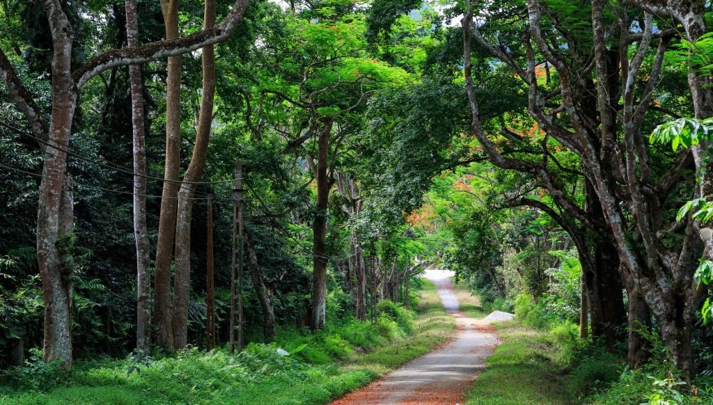 Ninh Binh in green