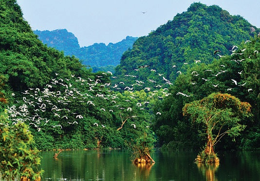 White stork flying over the sky in Ninh Binh