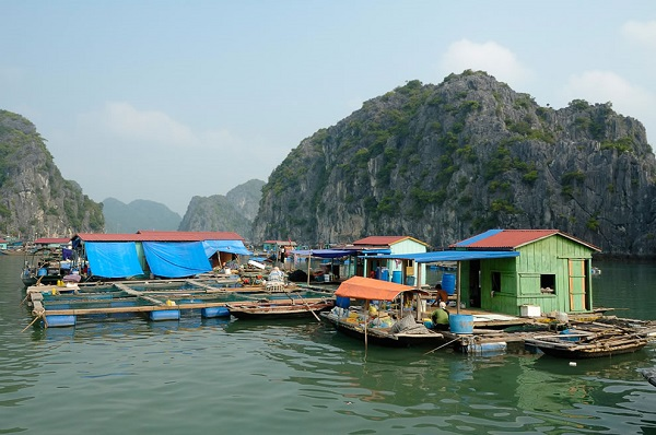 The peaceful fishing village right in Halong bay